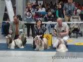 XXXIV Międzynarodowa Wystawa Psów Rasowych w Opolu – 26 kwietnia 2015 roku